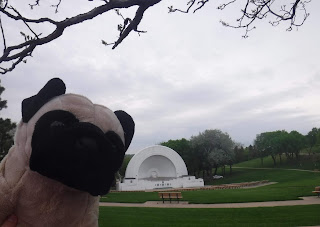 a plush pug appears next to a white art deco bandshell sitting in a lush green park