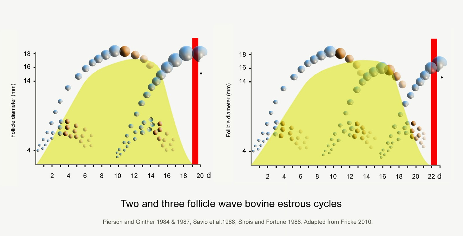 hight resolution of a diagram modified from several sources of two and three wave estrous cycles one cow has two waves of follicle growth with the follicle in the second wave