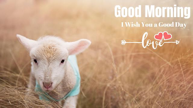 Good Morning Animals image