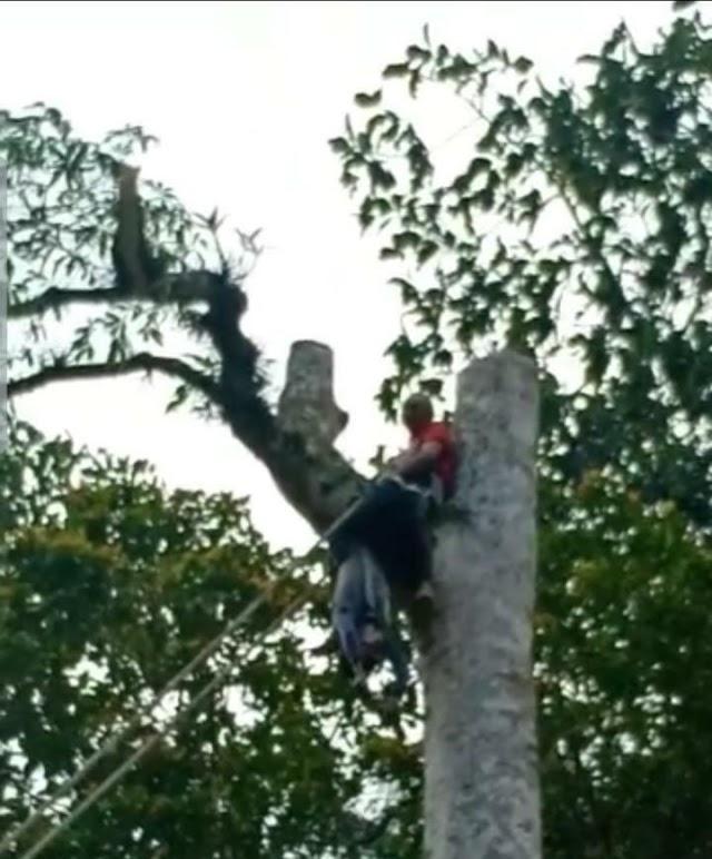 Penebang Kayu Meninggal Tertimpa Pohon