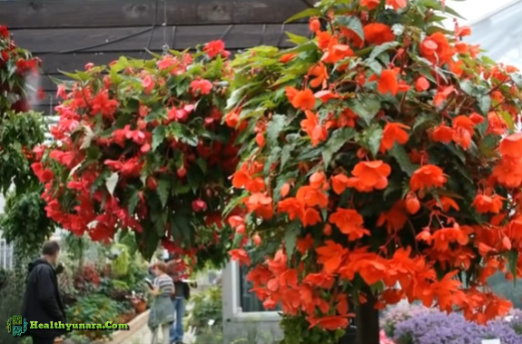 8 Types Of Hanging Flower Ornamental To Beautify Your House