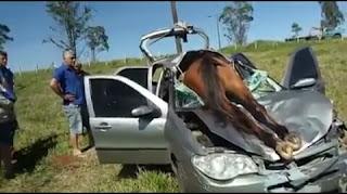 Animais na rodovia é crime.