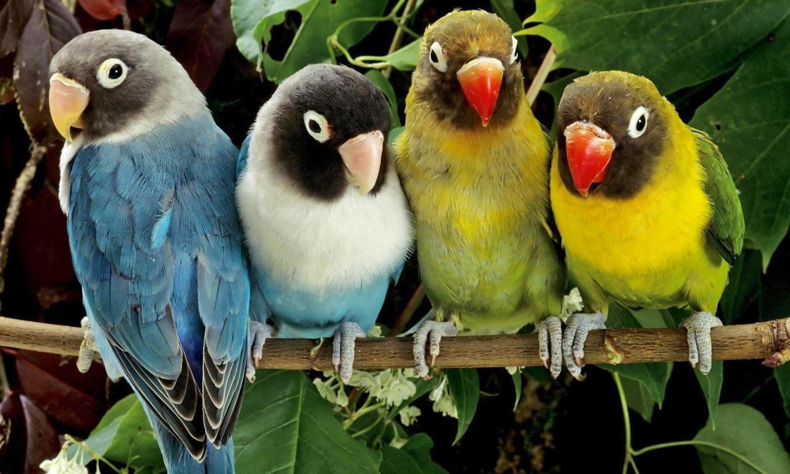 Beautiful Birds Pics HD for Kids Wallpapers | Parot Bird