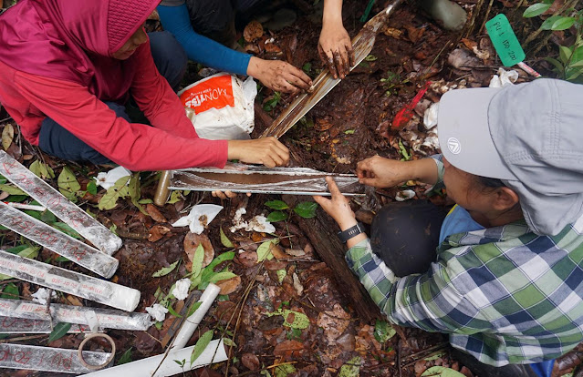 Indonesia's old and deep peatlands offer an archive of environmental changes