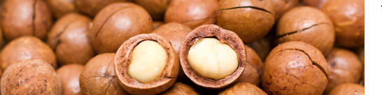 Benefits Of Macadamia Nuts
