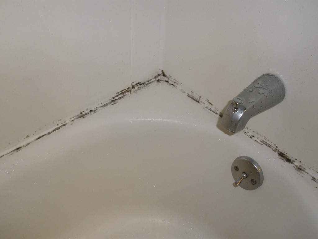 Schimmel Douche How To Get Mold Off Your Shower And A Few More Cleaning Tips
