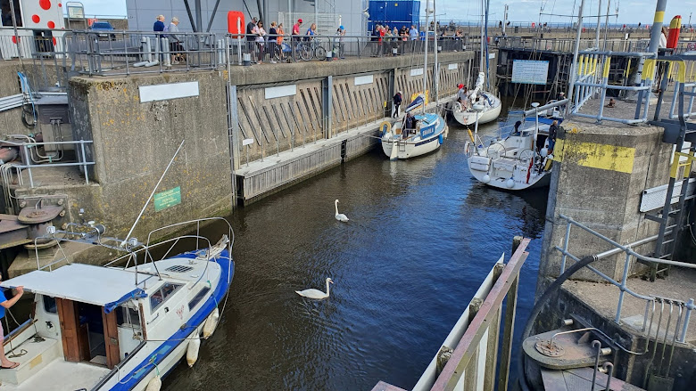 港口的進出閘道,天鵝也來湊熱鬧