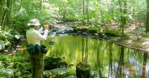 Stream and Vernal Pond on the Menunkatuck Trail