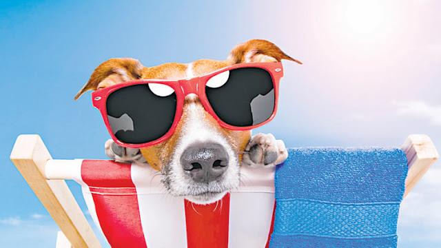 Mascotas vacaciones