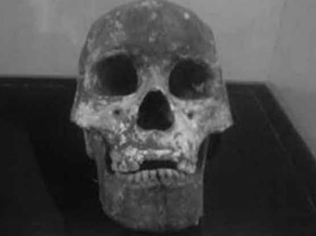 Fosil Homo Sapiens