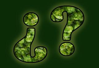 Pregúntale al Lúpulo: Búsquedas (4)