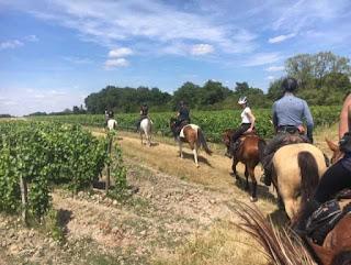ratsastamme viinitarhassa