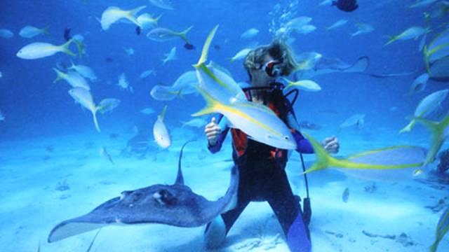 ท่องเที่ยว, แนวหินปะการัง, มัลดีฟส์, สถานที่ดำน้ำ, สถานดำน้ำทั่วโลก, อันดับสถานที่ดำน้ำ, แอมเบอร์กริส เคย์ ประเทศเบลีซ (Ambergris Caye, Belize)