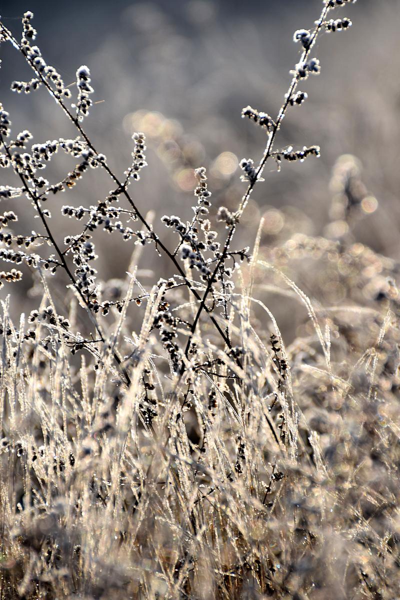łąka, przymrozek, wschód słońca