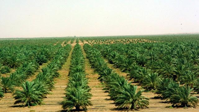 اهم المدن الزراعية في المملكة العربية السعودية