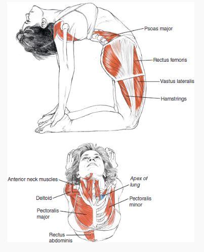 Como conseguir mais sangue no seu corpo