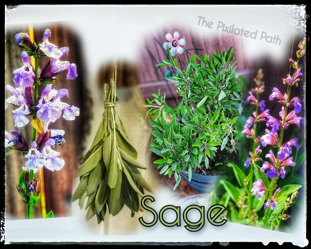 The Power of Plants: Sage (Salvia Officinalis)