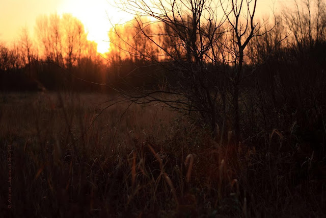 the golden hour© Annie Japaud 2013, photography, nature, blogging, Oughterard, Connemara, Ireland