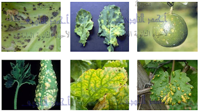 مسببات المرض والموت عند النباتات - الأعداء الخطرة - الفيروسات