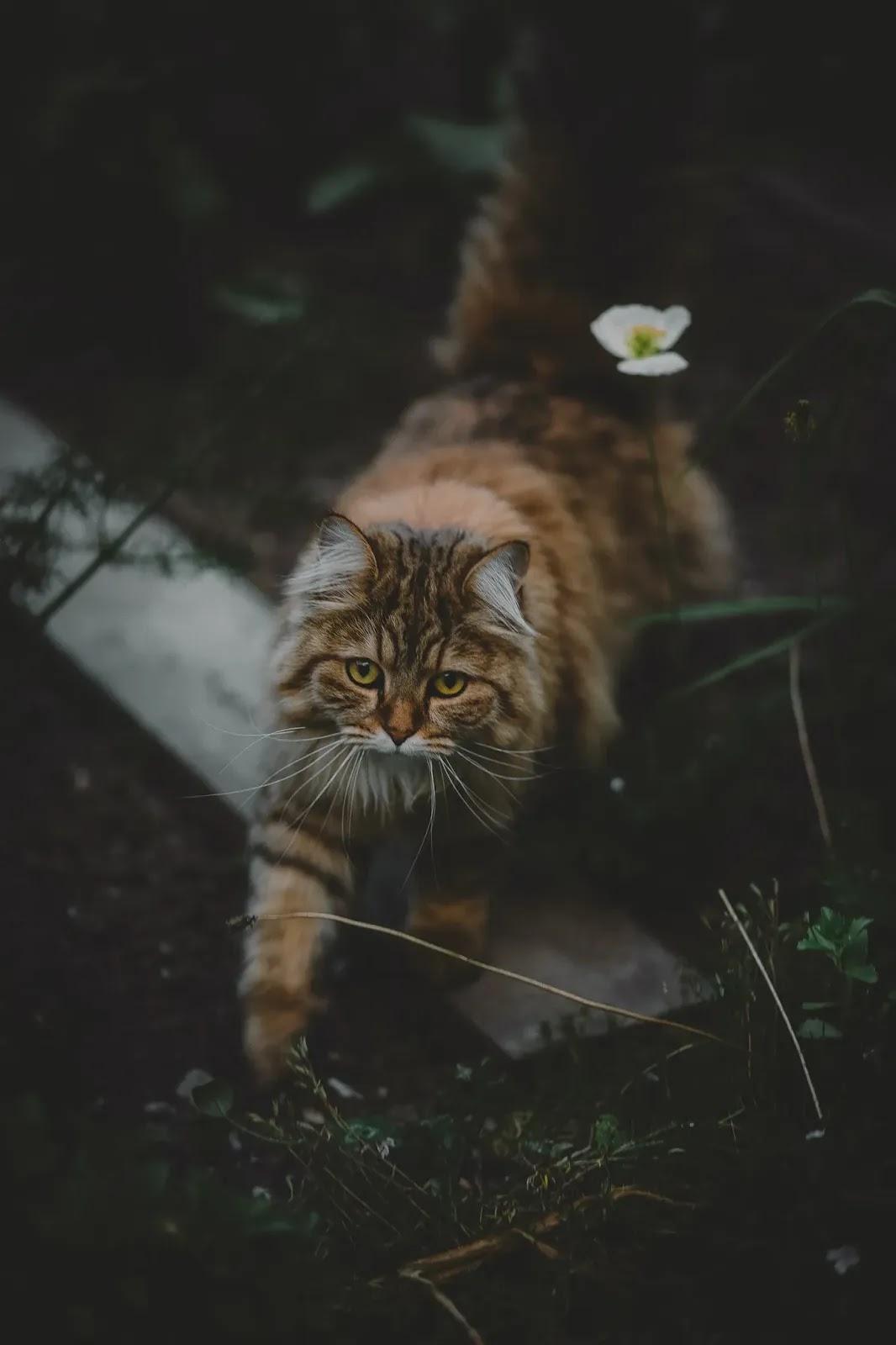 خلفية موبايل قطة للموبايل