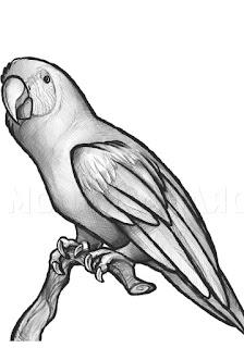 sketsa hewan hitam putih