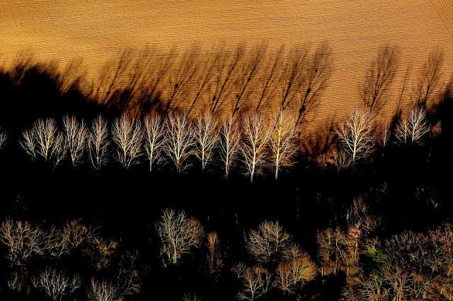 ligne d arbres en hiver