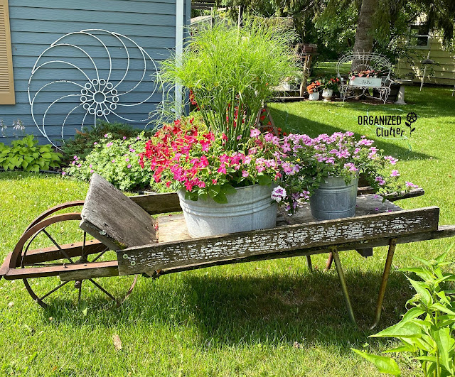 Prince Tut Annual Grass/Nicotiana Combo Laundry Tub Planter