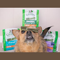 Greenies Dog Dental Chews review