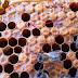 امراض النحل في هذا العدد مرض تكيس الحضنة