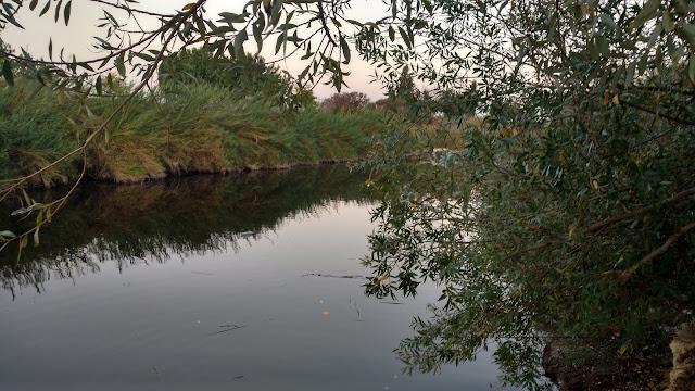 צמחייה בנחל אלכסנדר