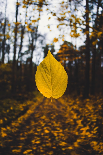 leaf falling in forest