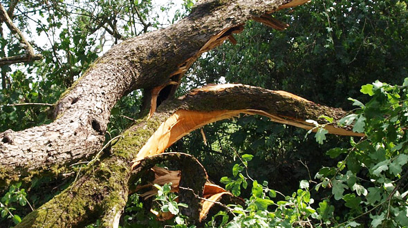 Tree emergency bark damage Marietta Ga