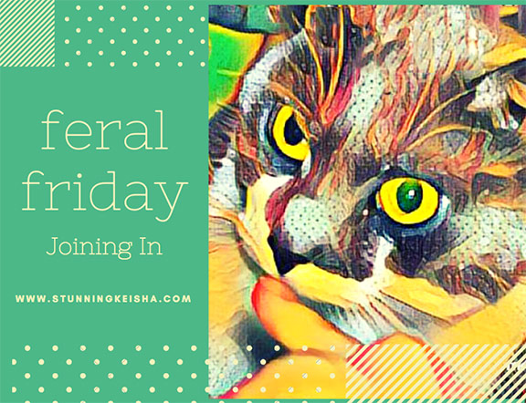 Feral Friday—Joining In