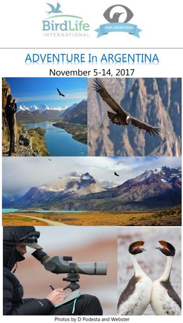 Avistaje en Salta, Argentina. Birdwatching y fotografía de Juan Carlos Gorrini.