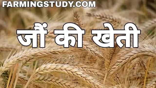 कैसे करें जौ की उन्नत खेती,  jau ki kheti, barley in hindi, jau ki fasal, जौ की खेती का समय, जौ की उन्नत किस्में, जौं की खेती कैसे करें, जौ के उपयोग,