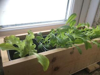 The Salad Windowbox, life on pig row