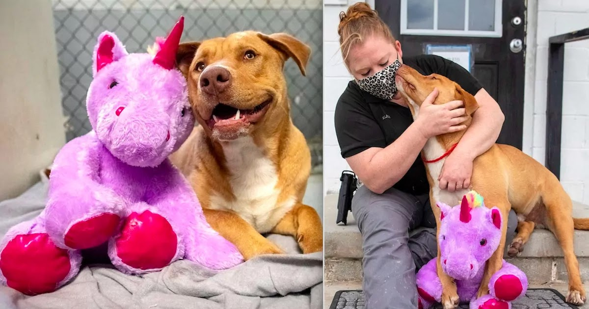 Stray Dog Tried 5 Times To Steal Fluffy Unicorn From A Store And Got Adopted