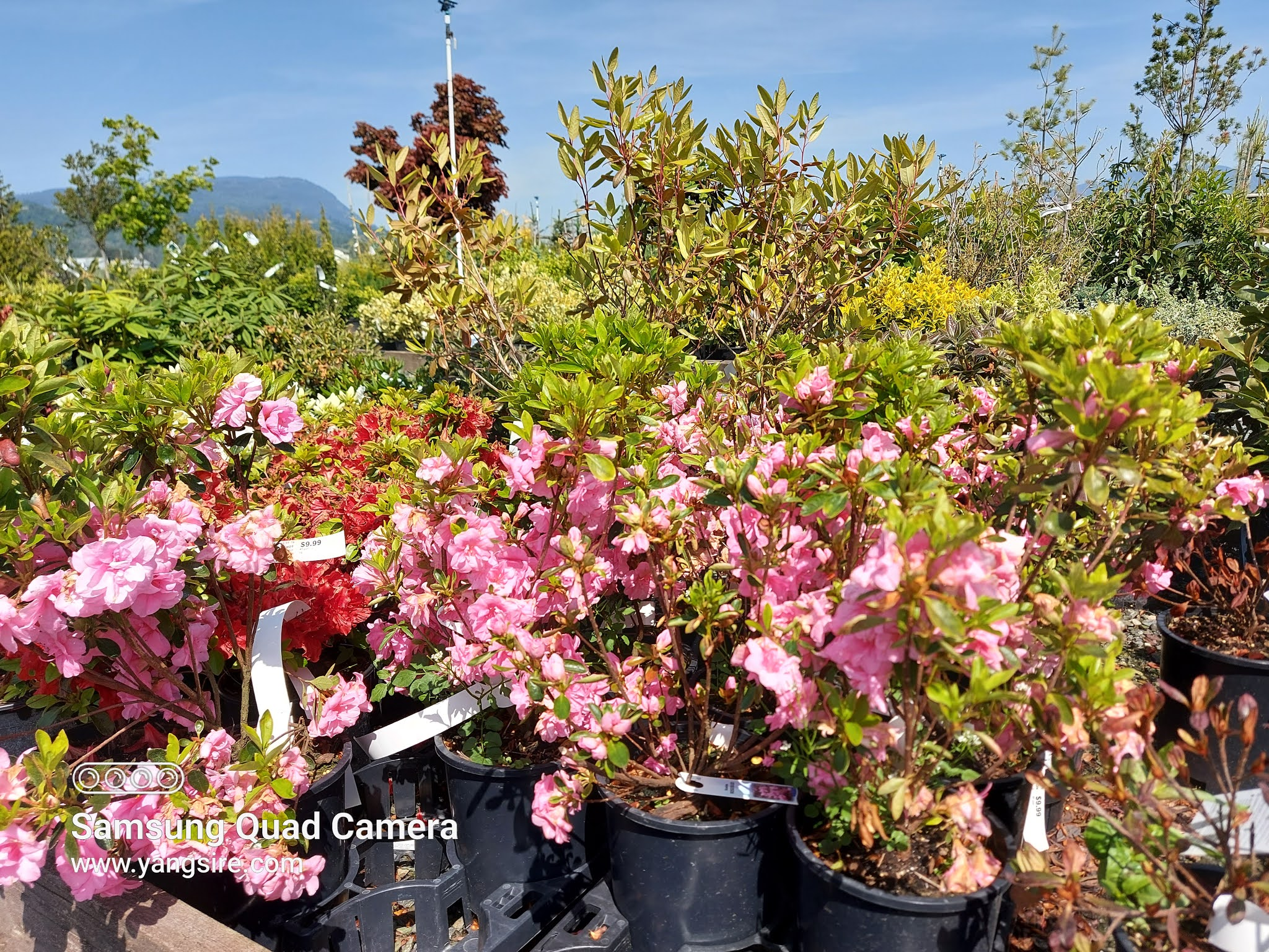 Beautiful plants with pick flowers