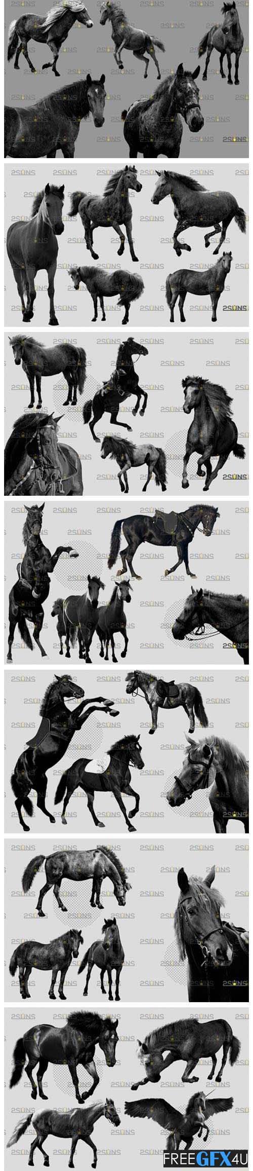 Black Horse Photoshop Overlay