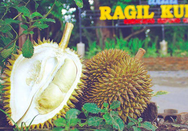 Durian lokal asal Desa Krenceng memiliki ciri khas rasa pahit.