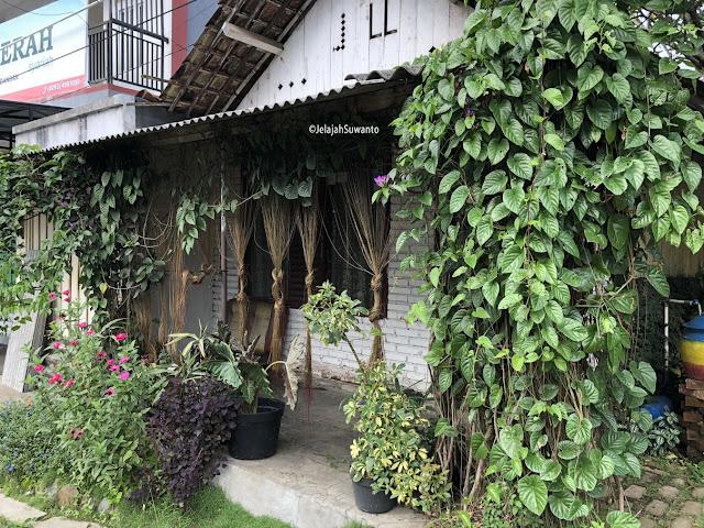 Curtain Ivy, Tanaman berakar gantung serupa tirai  Omah Yudhi Kandangan Temanggung ©JelajahSuwanto