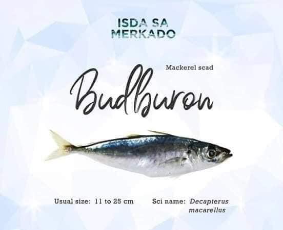 Budburon Mackerel Scad