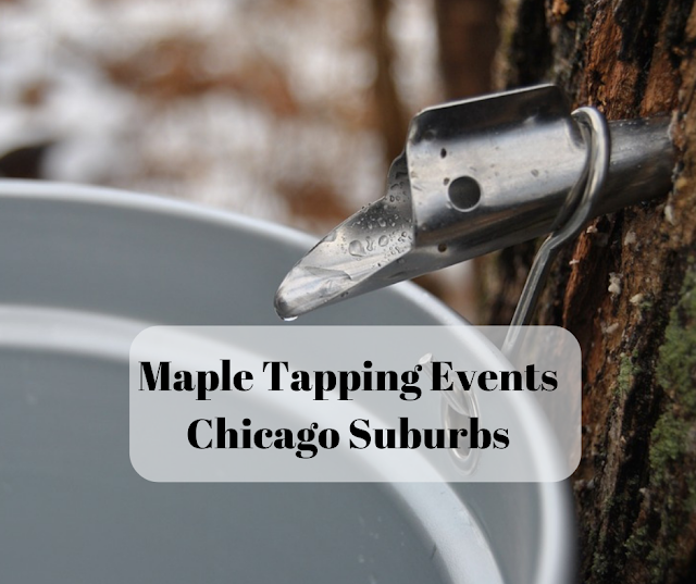 Maple Tapping Events Chicago Suburbs 2019