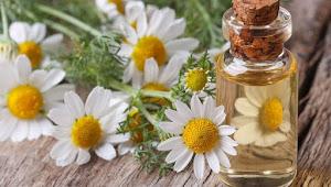 Manfaat dan Khasiat Chamomile Bagi Kesehatan dan Kecantikan