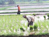 4 Cara Menentukan Musim Tanam di Indonesia Untuk Pemula