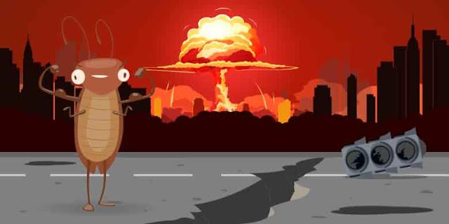Kecoa Mampu Bertahan Dari Bom Nuklir