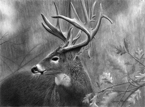 18-Charles-Black-Hyper-Realistic-Pencil-Drawings-of-Dogs-www-designstack-co