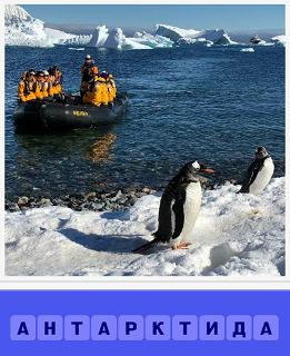пингвины в Антарктиде и к ним на лодке едет экспедиция
