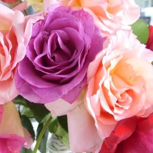 Mawar warna campuran menyiratkan perasaan yang campur aduk