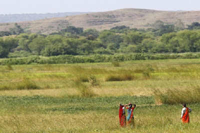 9,000-year-old signs of farming found in India's Ganga plains